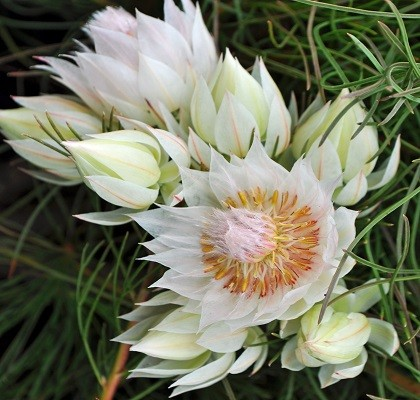 Speciality Flora California Resendiz Brothers