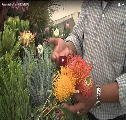 Resendiz Protea Growtube (2010)
