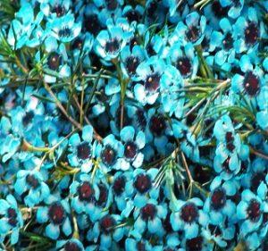 Tinted-Blue Resendiz Brothers