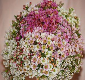 Waxflower-Bouquet Resendiz