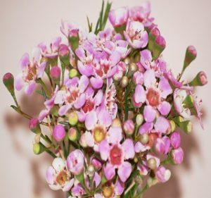 Winter-Pink Resendiz Brothers