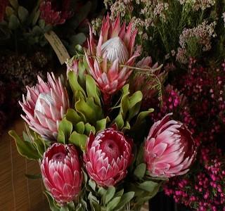 Flowers Protea care California Resendiz Brothers