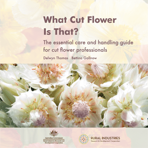 What cut flower