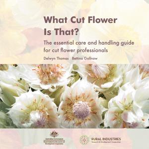 What cut flower